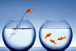 Rh negative facts and fiction – truth and contradictions KM-Goldfish